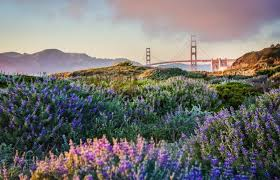 Where to See the Spring Super Bloom in the Bay Area | Team Brannigan