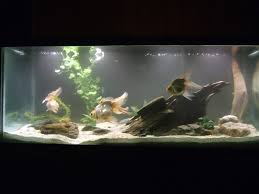 Goldfish tank  Goldfish TankBetta Fish CarePretty ...