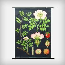 School Card Rose Flower Hagemann Good Old Vintage Design