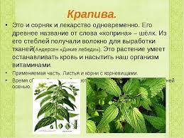 Реферат класс лекарственные растения > в каталоге Реферат 2 класс лекарственные растения