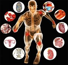 fall academy anatomy physiology apogee education during this 7 week program we will explore the powerful biological forces that control human behavior thought and emotions our anatomy physiology