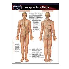 Acupuncture Point Chart Free Acupuncture Points Permachart