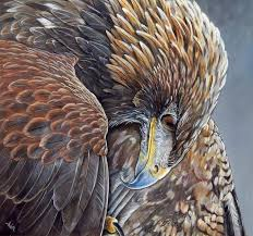 golden eagle painting by arie van der wijst