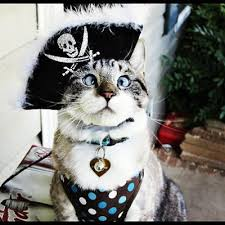 cute kittens in halloween costumes. Delighful Halloween Crosseyed Kitten Cat Halloween Costume Cute Funny In Cute Kittens Halloween Costumes N