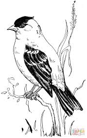 American Goldfinch Coloring Page Supercoloring Com