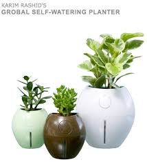 feng shui plant office. Picture 16 Feng Shui Plant Office