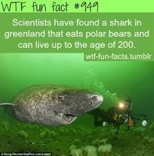 greenland shark i love sharks greenland shark and shark in greenland more of wtf fun facts are coming here funny