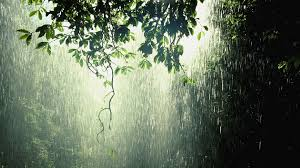raining nature free widescreen