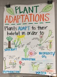Plant Adaptations Anchor Chart Fourth Grade Science