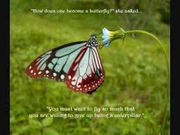 Beautiful Butterfly Quotes Best of Beautiful Butterfly Quotes To Inspire You YouTube