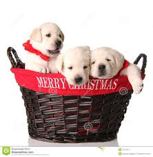 cute christmas puppies. Fine Cute Three Christmas Puppies For Cute Puppies E