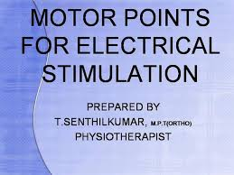 Motor Points For Electrical Stimulation For Physiotherapist