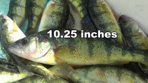 Snipe Lake Depth Chart Limited Out On Perch Fishing Snipe Lake