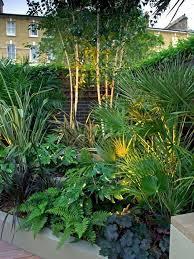 modern planting small urban garden
