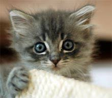 petco cats for sale. Exellent Cats Itu0027s Raining Kittens Right Now And Their Human Friends Are Swamped So  Theyu0027re Sending Out An SOS To Any Goodhearted Soul Who Can Give These Little Guys  Intended Petco Cats For Sale N