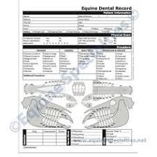 11 Best Dental Charts Images In 2016 Veterinary Medicine