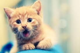 kittens cats hd cat images photos cute cat wallpapers 1920x1200