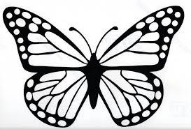 big pictures of butterflies.  Butterflies Hippy Motors Big Butterfly Car Sticker Camper Van Window Decal Blackjpg Inside Big Pictures Of Butterflies U