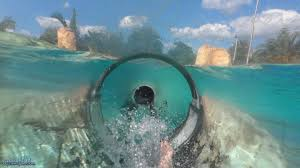 underwater water slide. Beautiful Slide Dolphin Plunge Body Slide Both Slides HD POVS Aquatica Seaworld Water  Park Orlando  YouTube On Underwater