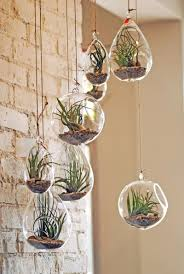 47 fabulous succulent planting ideas with diy tutorials you must look at airplant terrariumhanging