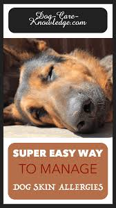 Dog Skin Allergies! This is a Super Easy Way To Manage Them