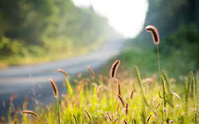 Nature, plants, grass, bokeh 640x1136 ...