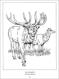 Small Picture Wildlife of Canada Coloring Book 017748 Details Rainbow