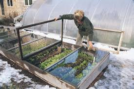 Small Picture Cold Frame Gardening Vegetable Gardener
