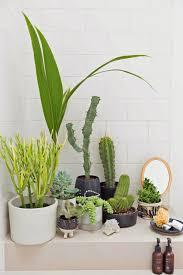 Indoor Garden How To Create An Indoor Garden