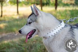 siberian husky genuine leather spiked collar in white