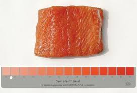 Heres Why Your Farmed Salmon Has Color Added To It Quartz