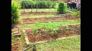 Small Picture Vegetable Garden Design backyard vegetable garden design ideas
