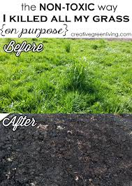 how to kill weeds in garden. the non-toxic way i killed all my grass (on purpose!) kill weeds how to in garden