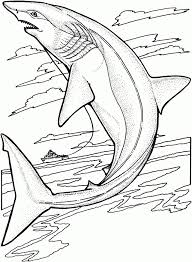 Small Picture Shark Coloring Pages For Grown UpsColoringPrintable Coloring