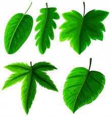 hojas verdes en blanco vector premium