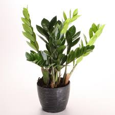 best indoor plants for office. check out our list of 14 lowlightloving houseplants you can grown indoors best indoor plants for office