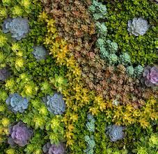 succulent walls on live succulent wall art with living walls truevert vertical garden solutions san diego