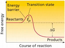 Enzyme Chart Reactions Enzymes