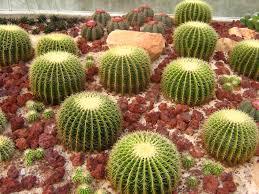 Small Picture Brilliant Cactus Gardens Garden And Design Ideas