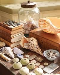 33 Seashell Collection Display Ideas Displaying