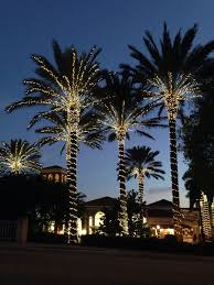 Palm Tree Lights Solar Lights On Palm Trees Palm Tree Lights Outdoor Christmas