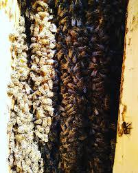 пчела смотрите тренды и фото узнайте что это за хэштег