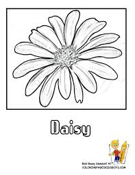 Small Picture Daisy Coloring Pages Free Coloring Home