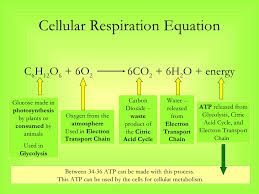 what is the correct balanced equation of photosynthesis biology