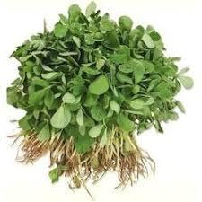 Fresh Methi Leafy Green Vegetable Leafy Vegetables Patte Daar