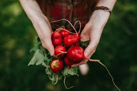 growing vegetables herbs and flowers doesn t have to be difficult by focusing on plants that are relatively easy to grow your chance of success