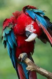 Pin de Maritina em beautiful birds | Periquitos, Papagaios coloridos,  Pássaros bonitos