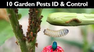 garden insect control how to control garden pests without insecticide pesticide gardening tips