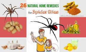 26 Natural Home Remedies For Spider Bites On Face, Neck & Arms