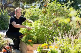 how to start a raised bed veggie garden